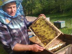 Пселопакеты пчелосемьи