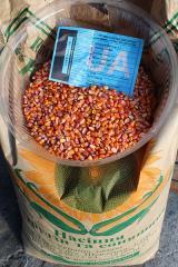 "Corn seeds grade ""Lyubava is 279 MV"