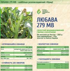 Corn seeds Lyubava
