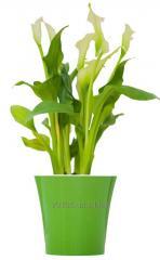 Горшки для цветов с дренажной системой