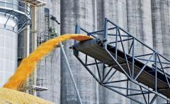 The screw conveyor, a screw conveyor for the