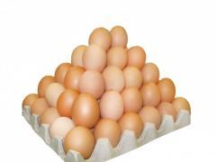 Яйцо куриное от производителя на экспорт