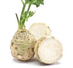 Celery seeds 1000s