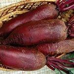 Beet seeds Opolsky 15 gr