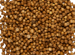 Coriander wholesale