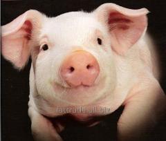 Жир свиной