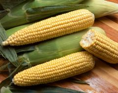 Seed grain of sweet corn
