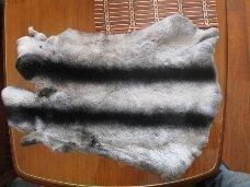 Fur of a rabbit of Rex.