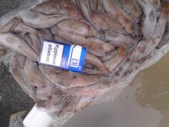 Bull-calf fresh-frozen krupnyy.vozmozhen expor