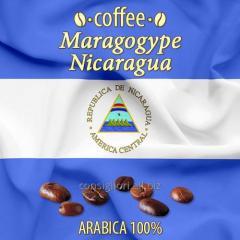 Nicaragua coffee Maragodzhip, large grain.