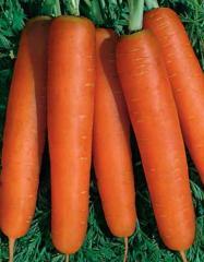 "Семена моркови ""Нантской"""