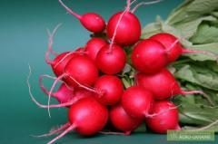 """Seeds of radish of """"Litter"""