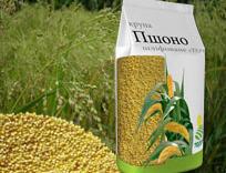 Grain millet polished TERRA premium