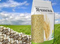 Grain barley yachnevy TERRA No. 1