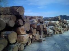 Лес строительный (дуб)