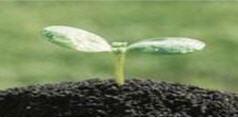 Mix soil Universal