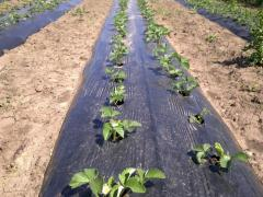 He black punched mulching film