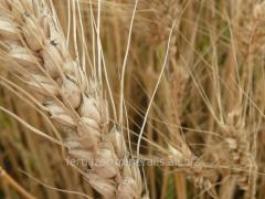 Microfertilizer Micro-Mineralis, RK (Grain)