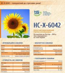 Посевной материал Подсолничника НС-Х- 6043