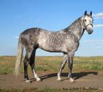 Horse Oryol rysisty