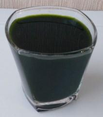 Natural forage for fish the Chlorella