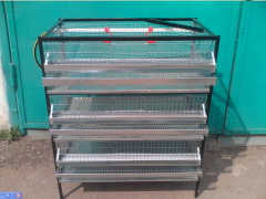 Equipment for growing of quails