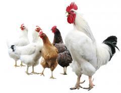 Aditivii pentru hrana păsărilor