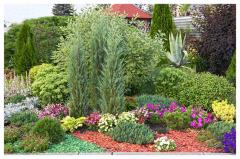 Ornamental Plants For Gardening