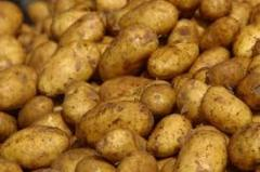 Potatoes from the producer
