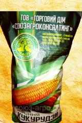 Corn Mos 182
