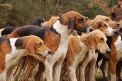 Электронные системы для собак и кошек NUM'AXES