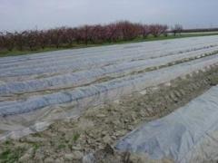 Film specialized asparagus polyethylene GEO