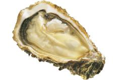 """Oyster of """"Financial De Claire"""