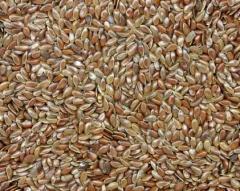 Flax oily