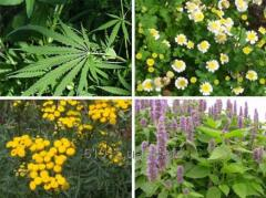 Medicinal plants and raw materials