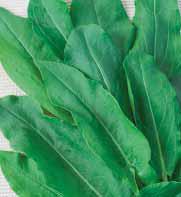 Sorrel 50 gr