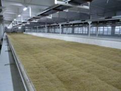 Malt (Malt) brewing barley light, conforming to