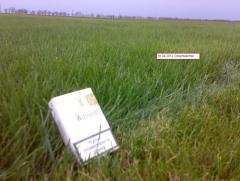 Рулонний газон для інтенсивного використання DLF