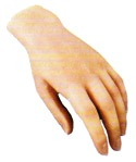 Prosthesis of an upper extremity, hand, hands,