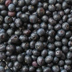 Berry bilberry dried, Bilberry ordinary (Vaccinium