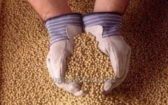 Soy, soybeans, 1000 tons