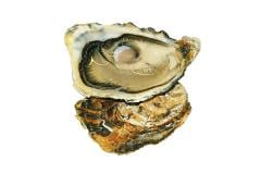 """Oyster of """"Zhilyard"""