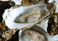 """Oyster of """"Spetsial"""