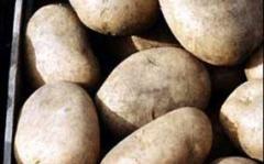 Продажа семенного картофеля оптом
