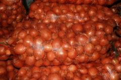 Продам лук репчатый от 20 т