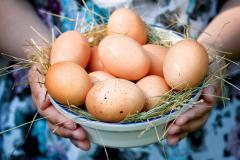 Куплю яйцо куриное - товароное С0, С1, С2 Экспорт