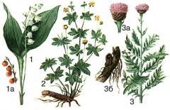 Herbs medicinal, medicinal to buy Herbs, Herbs