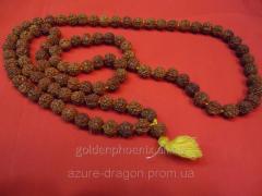 Beads from a rudraksha