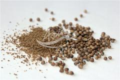 Coriander is the whole, halved grain coriander OPT