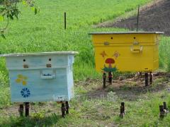 Улей с пчелами - Украинский лежак, Киев и область